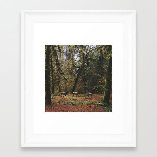 Rainforest Elk Framed Art Print