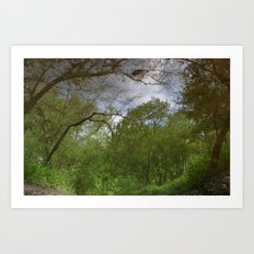 Nature's Looking Glass Art Print