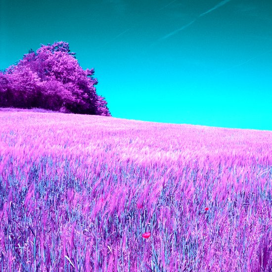 purple corn field II Art Print