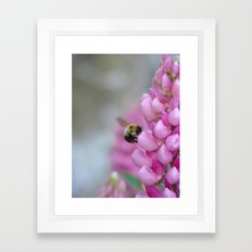 Buzzin' Round the Pink Framed Art Print