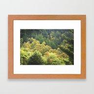 Forrest Green Framed Art Print