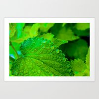 Vibrant Green Leaves Close Up Art Print