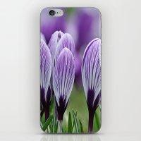 Purple Crocus iPhone & iPod Skin