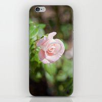 Little Pink Rose iPhone & iPod Skin