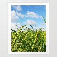 Ripe Rice Art Print