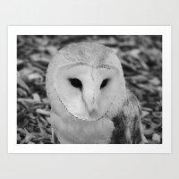 owl 2016 III Art Print