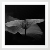 Lotus Leaf Edges Art Print