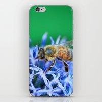 Bee & Flower iPhone & iPod Skin