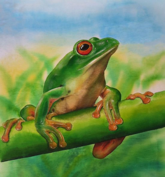 Green Treefrog Canvas Print