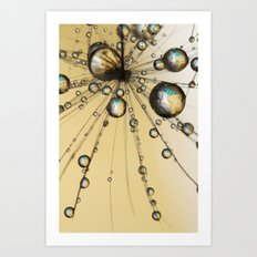 Single Dandy Seed Web Drops Art Print