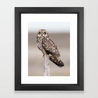 Short Eared Owl Framed Art Print