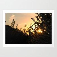 Apple Orchard at Sunset Art Print