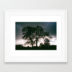 Sequoia Oak Framed Art Print