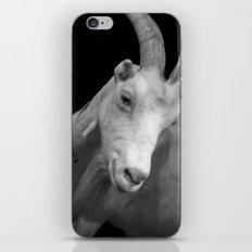 black goat iPhone & iPod Skin