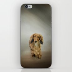 It's Showtime Baby - Dachshund iPhone & iPod Skin