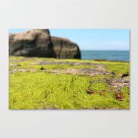 Outer Island I Canvas Print