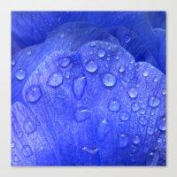 blue petal drops I Canvas Print