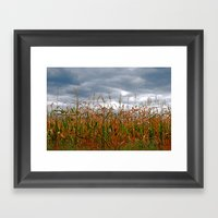 Corn Field Framed Art Print