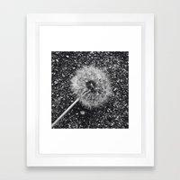 Dandelion in black and white Framed Art Print