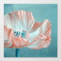 sweet poppy  Canvas Print