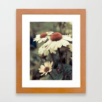 Soft White Cone Flower  Framed Art Print