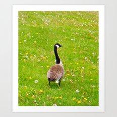 Goose in a field of flowers Art Print