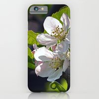 iPhone & iPod Case featuring Apple Blossom by Steve Watson