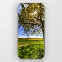 The Daffodil Summer Farm iPhone & iPod Skin