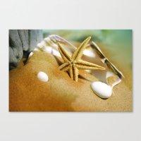 Sea shells II Canvas Print