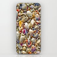 Seashells On The Shore iPhone & iPod Skin