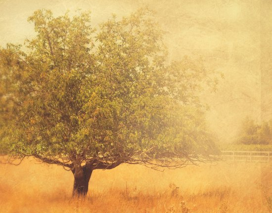 tree photograph. Solitude.  Art Print