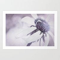 Echinacea purple Art Print
