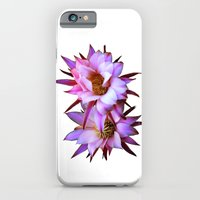 iPhone & iPod Case featuring Purple cactus blossom by CarP