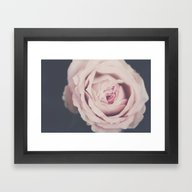 Framed Art Print featuring French Rose by Ingrid Beddoes