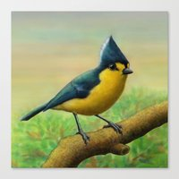 Yellow Tit Canvas Print