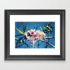 Nectarine Blossoms Framed Art Print