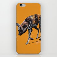 African Wild Dog iPhone & iPod Skin