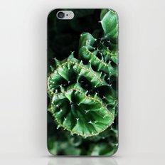 Emerald green Cactus Botanical Photography, Nature, Macro, iPhone & iPod Skin