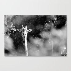portrait of giraffe Canvas Print