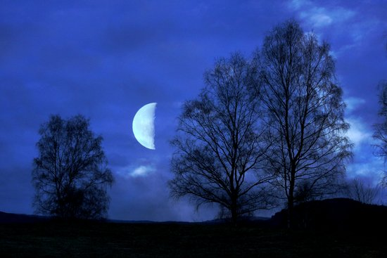 Moon between Trees  - JUSTART © Art Print