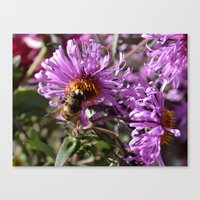 Busy Bee On A Violet Flo… Canvas Print