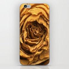 Old Rose iPhone & iPod Skin
