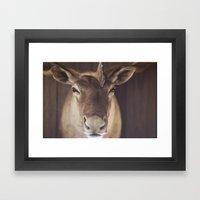 Moose Framed Art Print