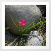 Rock Garden Tulip Art Print