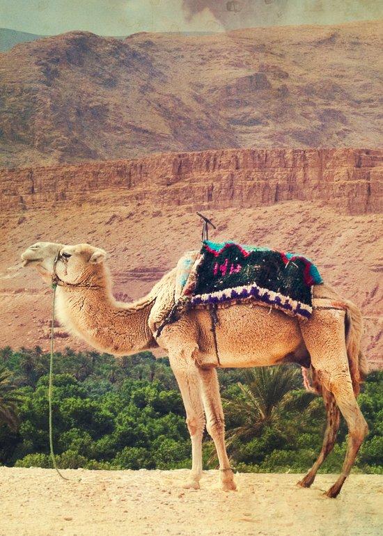 Proud Camel Art Print