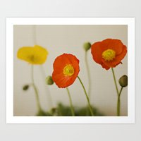 Orange Poppy Bloom Red G… Art Print