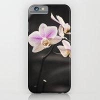 Orchid Dance iPhone 6 Slim Case