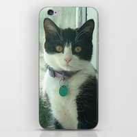 Raindrop Kitty iPhone & iPod Skin
