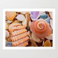 Macro Shells Art Print