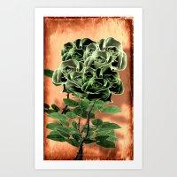 WILD IRISH ROSE - 051 Art Print